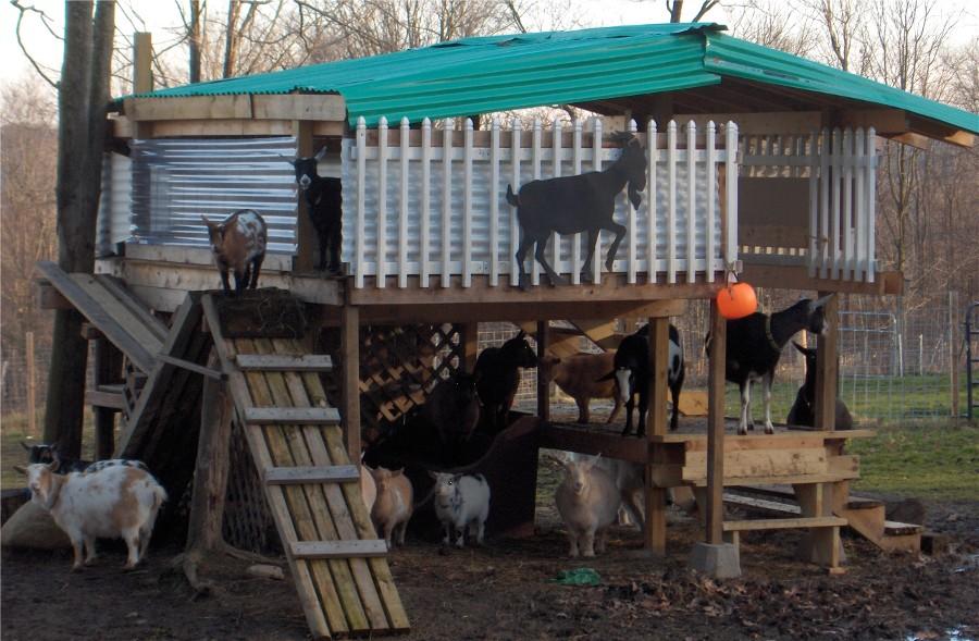 Goat shelter - photo#17